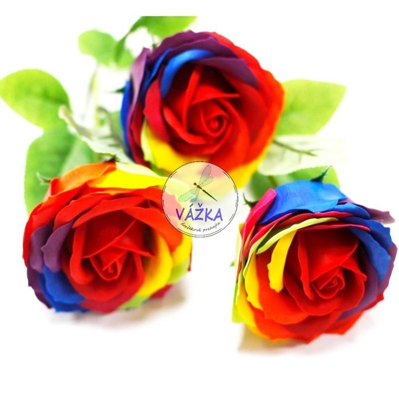 Mydlový kvet Dúhová ruža